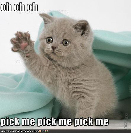 pick_me_kitten
